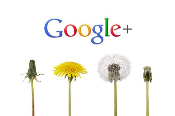 Das langsame Ende von Google+